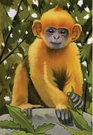 An illustration of a leaf monkey