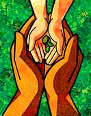 hands holding a small seedling
