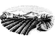 A black and white drawing of a farmland ready for harvest