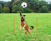 half breed dog - playing restrictions: Tierratgeber-Bücher / animal guidebooks