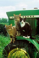 three domestic cats on tractor