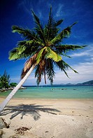 Palm tree and tropical beach in Phuket Thailand