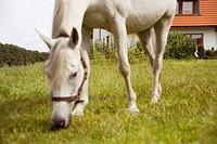 Residence, meadow, horse, eating, detail, one-family house, garden, meadow, paddock, paddock, animal, mammal, usefulness-animal, Reitpferd, mold, padd...