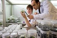 In vitro culture. Biotechnology Laboratory, Neiker Tecnalia, Instituto de Investigación y Desarrollo Agrario, Ganadero, Forestal y del Medio Natural, ...