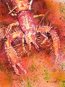 Hawaiian Lobster, Close-up of lobster Watercolor painting