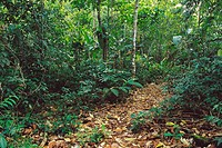 Trail in Caribbean rainforest, Tortuguero National Park. Costa Rica