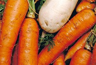Carrots and white radish
