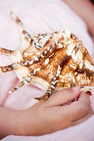 Child´s hand holding sea shell