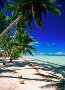 Palm trees on a beach, Bora Bora, French Polynesia