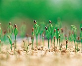 Close-up Of Sprouts,Korea