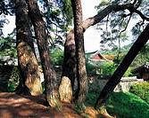 Trees,Gyeongbuk,Korea