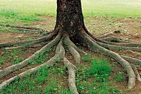 Tree Roots,Korea