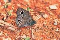 Butterfly,Korea
