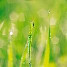 A katydids