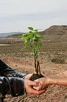 Close-up of two people holding a sapling together