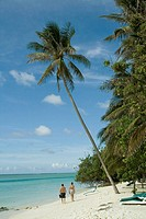 Palmtree on Island, Maldives, Indian Ocean
