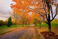 Sunset along country road, fall colors trees, Happy Valley, Oregon, USA