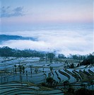 the terraces in Yuanyang,Yunnan Province,China