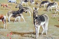 Painting of quaggas Equus quagga quagga, extinct zebras from South Africa, in the California Academy of Sciences.