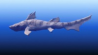 Hybodus shark. Artwork of a Hybodus shark swimming. This genus of prehistoric shark existed during the late Permian period until the beginning of the ...