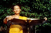 A monk holds a Lyle´s flying fox bat Pteropus lylei. This species ranges through Cambodia, Thailand and Vietnam.
