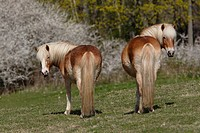 Rear view of horses standing in a field