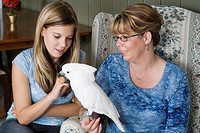 Mother and daughter offer a walnut to their umbrella cockatoo Cacatua alba.