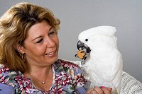 Woman giver her pet Umbrella cockatoo Cacatua alba a walnut treat.
