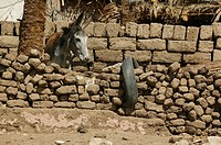 Earthen wall in the Gurna village