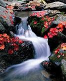 Stream In Autumn,Korea