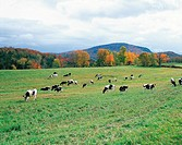 Vermont,USA