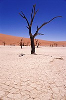 Dead Tree Skeletons and Cracked Clay surrounded by Sand Dunes, Dead Vlei, Namib_Naukluft Park. Namib Desert, Namibia, Africa