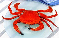 etrille crab