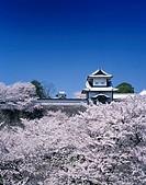 Cherry Blossoms The Kanazawa castle Ishikawa gate Kanazawa Ishikawa Japan