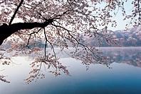 Everland,Gyeonggi,Korea