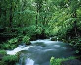 Fresh Green, Oirase, Asura, Towadako, Aomori, Japan