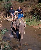 Elephant camp Chiang Mai Thailand person Elephant River Tree
