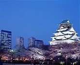 Osaka castle, Cherry Blossoms, Night view, Chuo, Osaka, Osaka, Japan