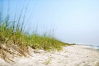 Sand dune with grass at the beach