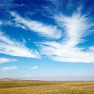 Sky scene of golden field and wispy cirrus clouds