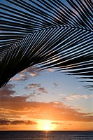 Sunset sky framed by palm fronds over the Pacific Ocean in Kihei, Maui, Hawaii, USA