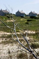 Branch on beach with houses in background on Bald Head Island, North Carolina
