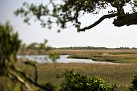 Marsh landscape on Bald Head Island, North Carolina