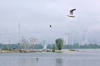 Leslie Street Spit bird sanctuary in Toronto