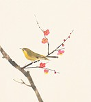 A Japanese nightingale perching on branch of plum tree