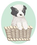 Puppy in basket, portrait