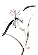 Spiderwort, ink brush painting, white background, cut out