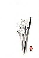 Daffodil, ink brush painting, white background, cut out, copy space