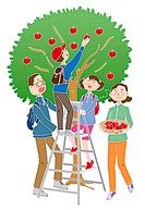 A family picking apples, Illustration