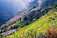 Terraced Fields, Annapurna Region, Nepal